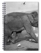 Minnie The Elephant, 1920s Spiral Notebook