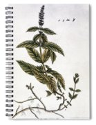 Mint Plant, 1735 Spiral Notebook