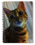 Mischievous Bengal Cat Spiral Notebook