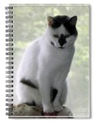 Miss Jerrie Cat With Watercolor Effect Spiral Notebook