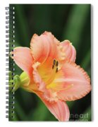 Miss Tinkerbell Daylily Spiral Notebook