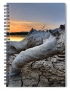 Mistery Old Tree Spiral Notebook