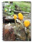 Mitrula Paludosa Spiral Notebook