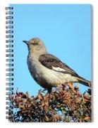 Mockingbird . 7682 Spiral Notebook