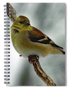 Molting In January? - American Goldfinch Spiral Notebook