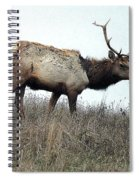 Molting Tomales Bay Elk Spiral Notebook