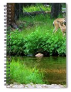 Mom And Baby Deer Spiral Notebook