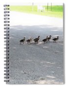Mom And Her Ducklings Spiral Notebook
