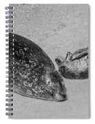Momma And Baby  Black And White Spiral Notebook