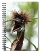 Momma I Am Hungry Spiral Notebook