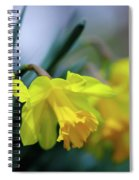 Mom's Daffs Spiral Notebook