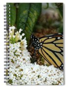 Monarch And The Butterfly Bush  Spiral Notebook