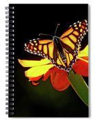 Monarch And Tithonia Light And Shadow Spiral Notebook