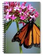 Monarch Beauty Spiral Notebook