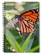 Monarch Butterfly 3 Spiral Notebook