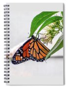 Monarch Butterfly In The Garden 3 Spiral Notebook