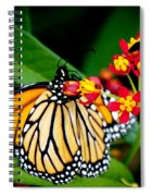 Monarch Butterfly At Lunch With 2 Box Elder Bugs Spiral Notebook