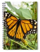 Monarch Butterfly II Spiral Notebook
