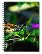 Monarch Buttefly Spiral Notebook
