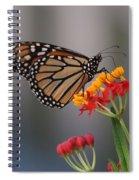 Monarch Butterfly On Milkweed Spiral Notebook