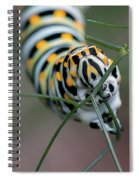 Monarch Caterpillar Clutches Dill In Pincers, Macro Spiral Notebook