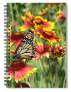 Monarch On Blanketflower Spiral Notebook