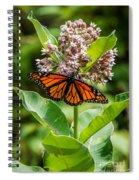 Monarch On Milk Weed Spiral Notebook