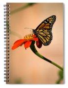 Monarch On Zinnia Spiral Notebook