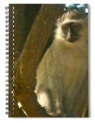 Monkey In The Tree Spiral Notebook