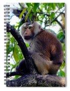 Monkey In Tree Spiral Notebook