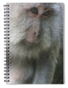 Monkey Mother 3 Spiral Notebook