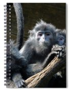 Monkey Trio Spiral Notebook