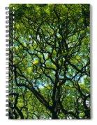 Monkeypod Canopy Spiral Notebook