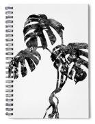Monstera Leaf-black Spiral Notebook