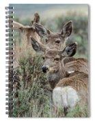 Montana Mule Deer On A Spring Night Spiral Notebook