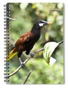 Montezuma Oropendula Spiral Notebook