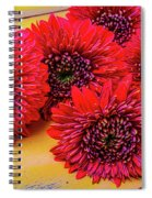 Moody Red Gerbera Dasies Spiral Notebook