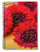 Moody Red Gerbera Dasies Spiral Notebook