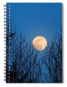 Moon Rising In The Trees Spiral Notebook