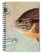 Mooneyes, Sunfish Spiral Notebook