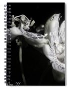 Moonlight Promenade - A Passion Fruit Production Spiral Notebook