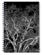 Moonlit Night Spiral Notebook
