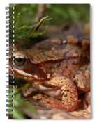 Moor Frog In September  Spiral Notebook