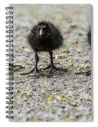Moorhen Chicks Spiral Notebook