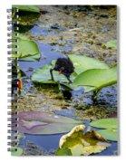 Moorhen N Baby 2 Spiral Notebook