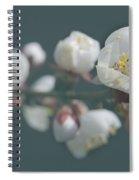 Moorpark Apricot B 4212 Spiral Notebook