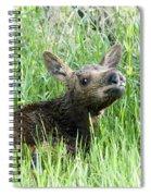 Moose Baby Spiral Notebook