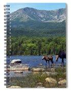 Moose Baxter State Park Maine 2 Spiral Notebook