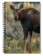 Moose Calf In Fall Colors Spiral Notebook