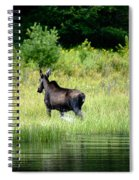 Moose Cow Spiral Notebook